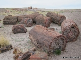 Petrified Forest NP 05
